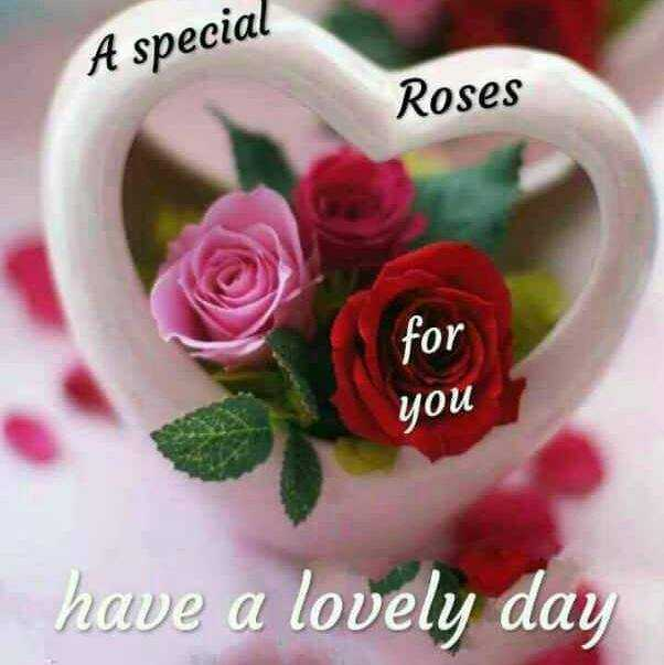 rose day - A special Roses for you have a lovely day - ShareChat