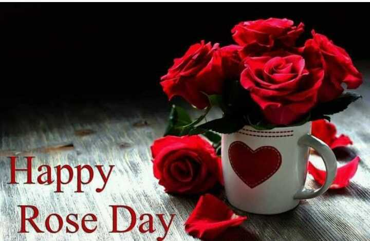 rose 🌹 day - ) Happy Rose Day - ShareChat