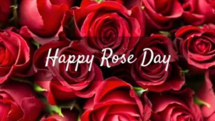 rose 🌹 day - Happy Rose Day - ShareChat