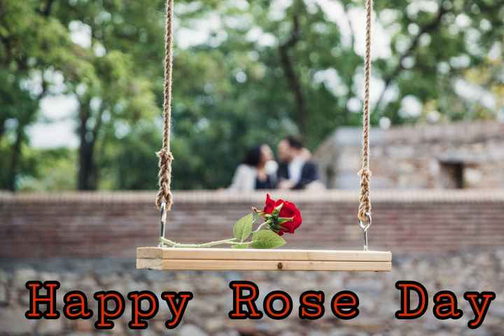 rose day 🌹🌹 - Happy Rose Day - ShareChat